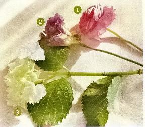 flores0040b.jpg