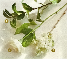 flores0042c.jpg
