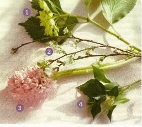 flores0044c.jpg