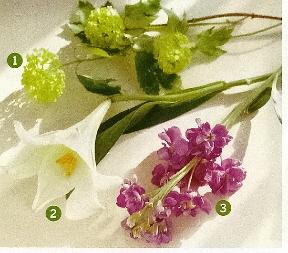 flores0046c.jpg