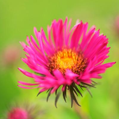 Plantas web de la casa - Plantas de sol directo ...