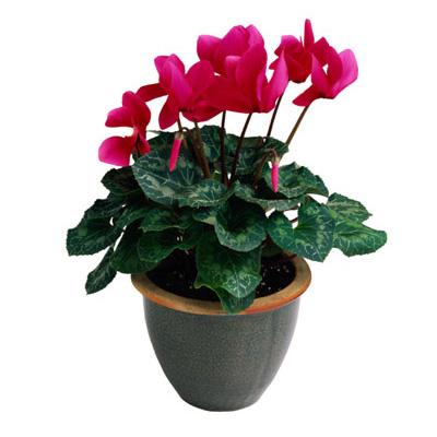 Plantas Y Flores Adecuadas Para El Otono Web De La Casa - Plantas-interior-con-flor