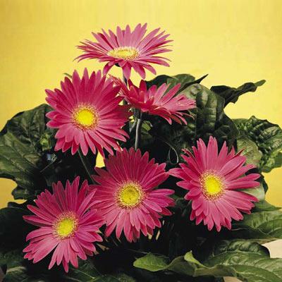Plantas y flores adecuadas para el otoño - Web de la casa