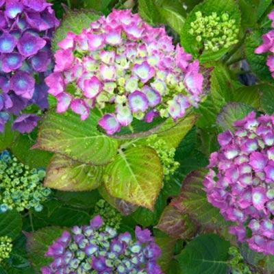 Plantas que soportan mucho sol top las mejores plantas - Plantas exterior mucho sol ...