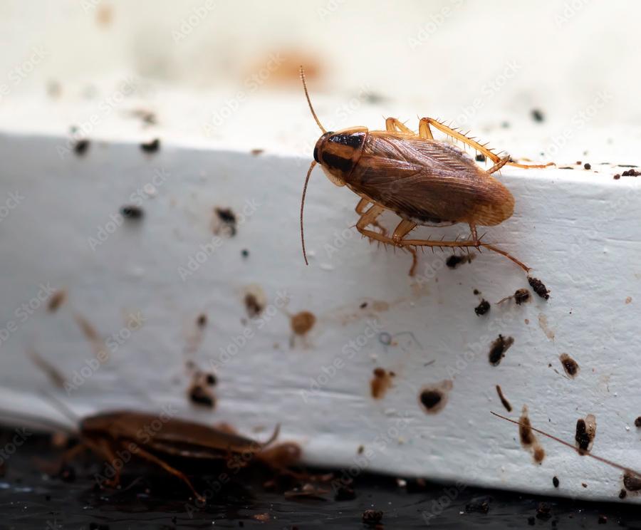 Cucaracha entrando por ventana