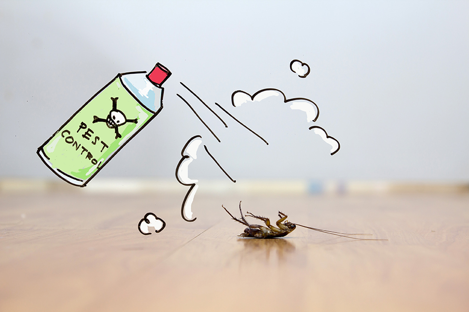 Matar cucarachas con insecticidas